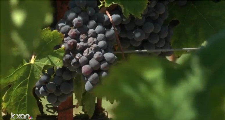 High Plains grapes are foundation of Texas wine industry